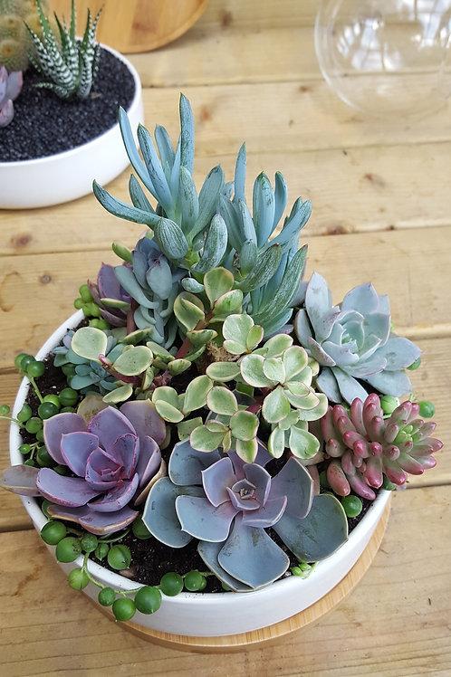Planters - Ceramic Bowl