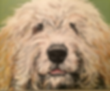 Barbara Bradshaw Pet Portrait