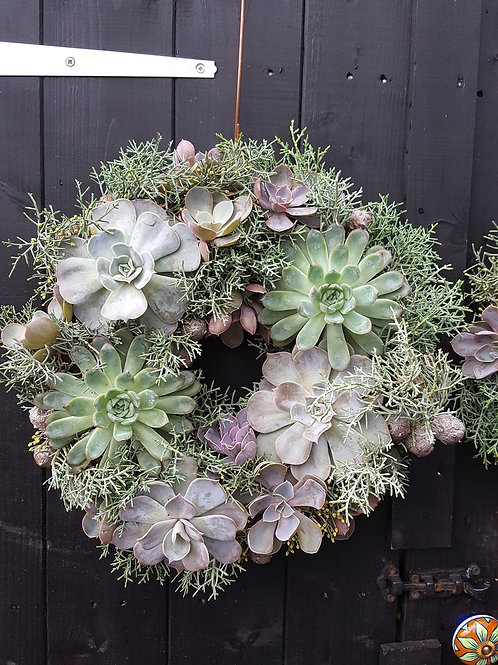 Christmas Living Wreath : Mixed Echeveria with Cut Cypress