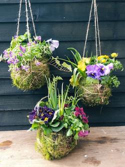 Seasonal colours and plants
