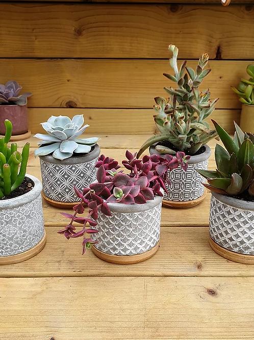 Cement Succulent Pot