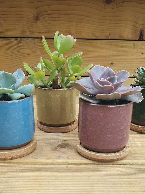 Ceramic ice cracked Succulent Pot
