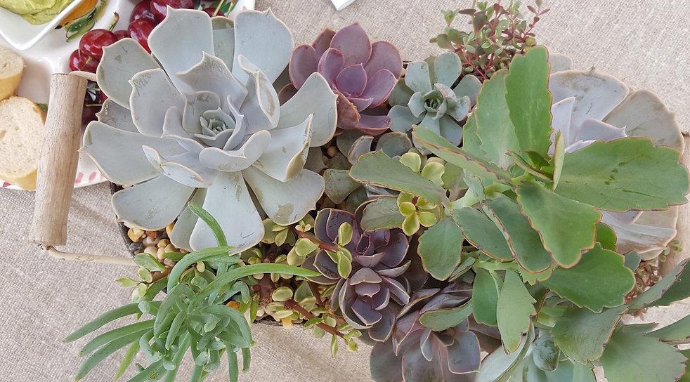 Succulents _ The Little Hanging Garden _