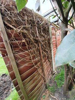 Fence back 2