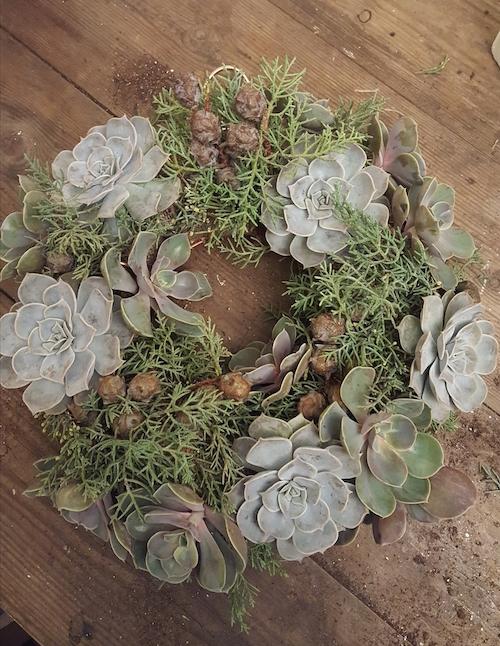 Christmas Living Wreath
