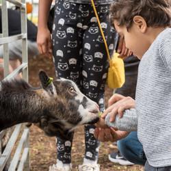 Petting Zoo Claremont Gardens
