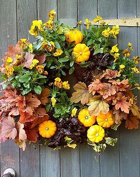 "16"" Autumnal Living Wreath. Including viola, ajuga, heuchera, ivy and munchkins (mini pump"
