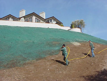 Effective Turf Renovation in Mountain View, CA