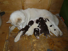 Day 10 - pile of pups.jpg