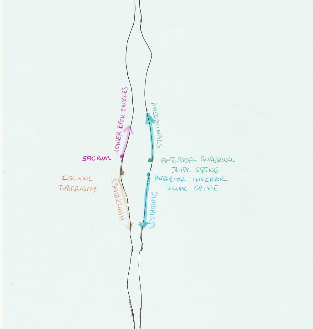 Anatomy of lower back pain.jpg