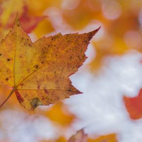 4 fall rituals for less stress this upcoming holiday season