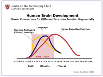 Learning in the Womb & Brain Architecture