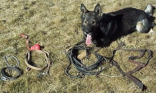 Tracking Dog Equipment