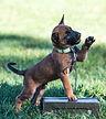 Malinious Puppy