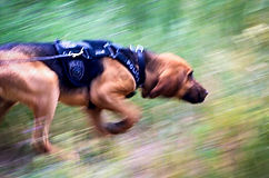 Bloodhound Tracking