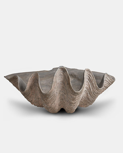 Large Natural Decorative Shell