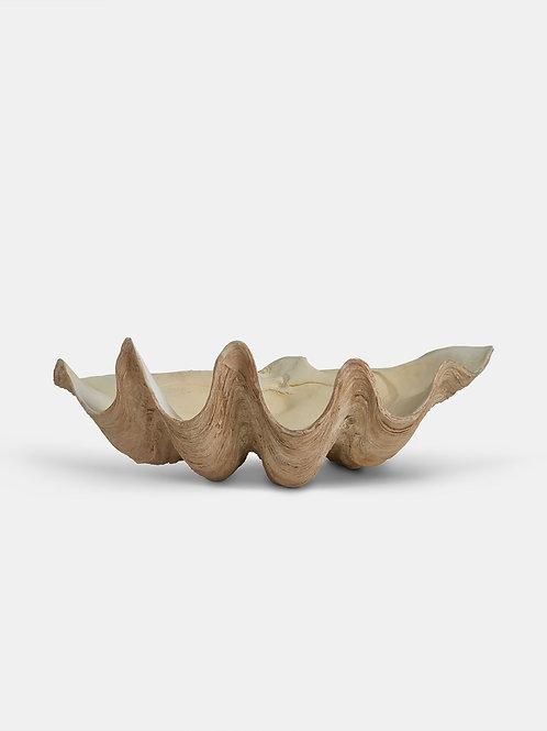 Natural Decorative Shell