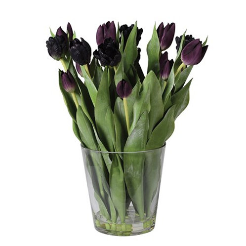 Mixed Black Tulips Arranged in Glass Vase