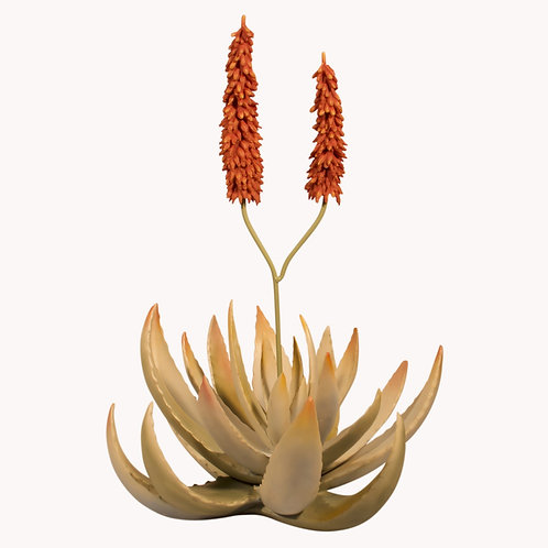 Decorative Blooming Aloe Plant