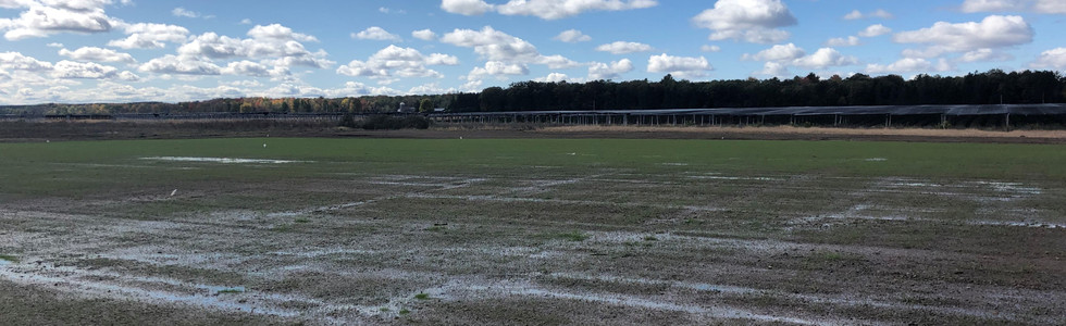 Field 3 - Seeded - Sept 2020