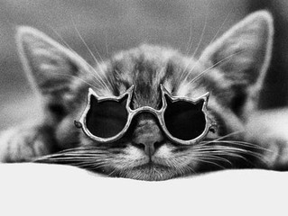 How to keep your Hypoallergenic Siberian Cat cool in Summer?