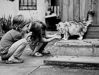 Kids and Hypoallergenic Cats