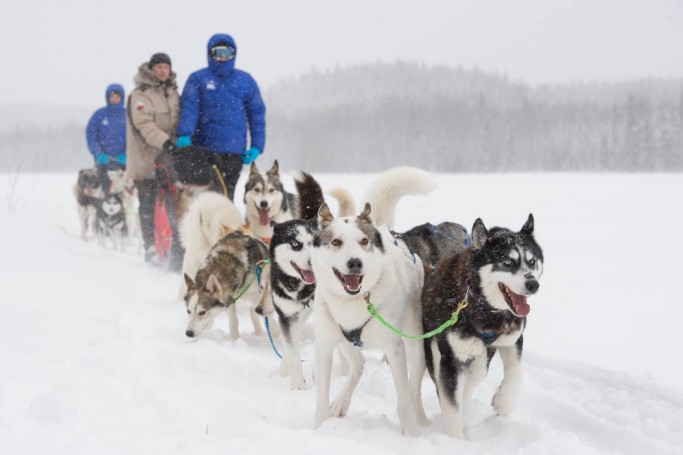 Excusrión trineos Huskies Siberianos Mini Caravanas Caretta España