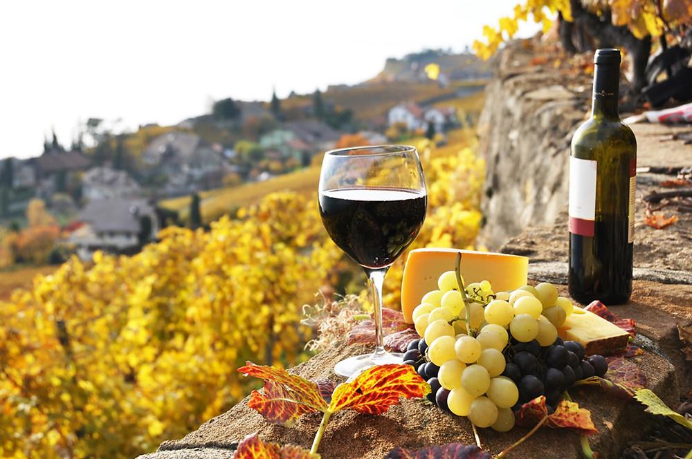 Ruta del vino Mini Caravanas España