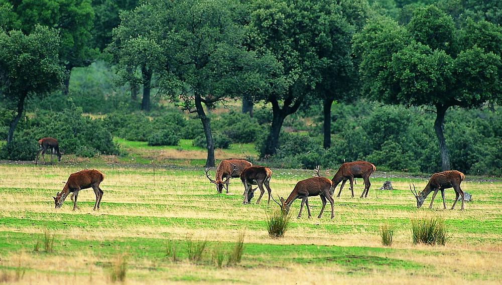 Parque Nacional de Cabañeros Mini Caraavanas