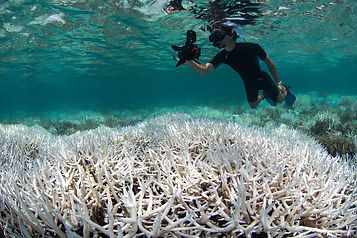 Documenting-the-coral-bleaching-in-New-C
