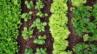 gardening-with-herbs-article-lead-596-33