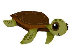 turtle solo.jpg