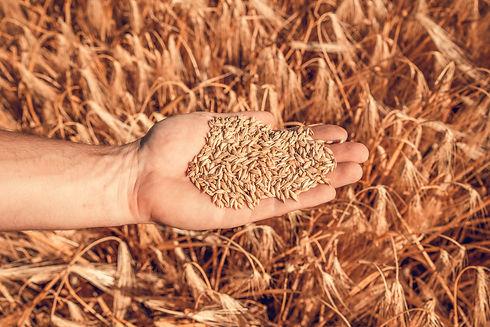 Barley & malt (Olivier-Douard-2019).jpg