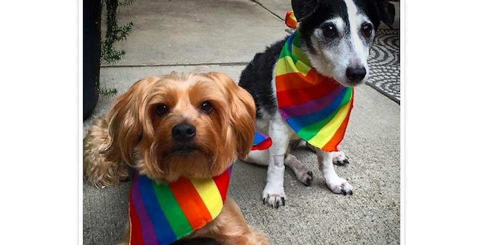 Pride Pet Show Contest