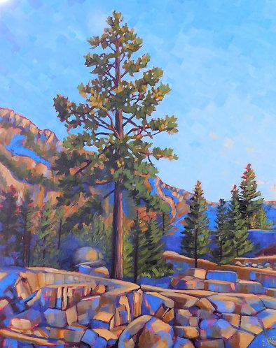 Among the Pines - Lake Tahoe
