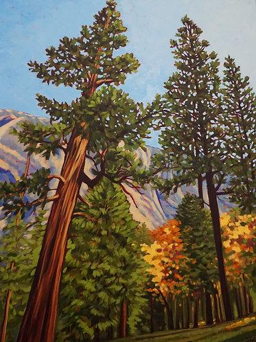 Towering Pines