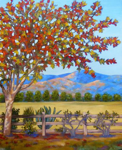 Santa Ynez Autumn