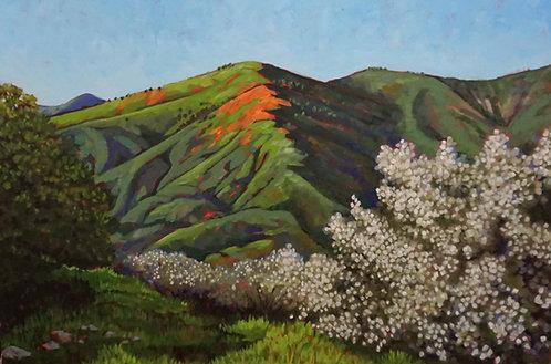 Spring Emerging on Figueroa Mountain
