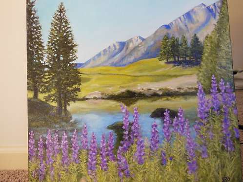 Lupines in Spring