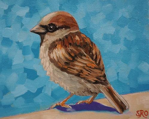 House Sparrow I
