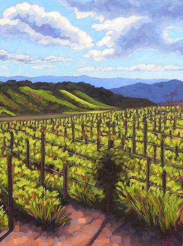 Santa Ynez Vineyard