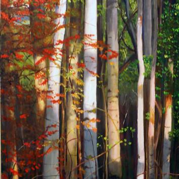 The Poplars  (in Autumn)