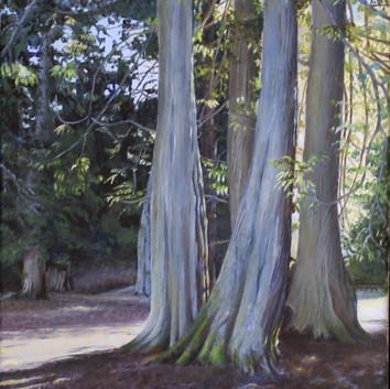 Mount Douglas Cedars