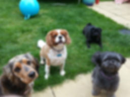 home from home dog care, home from home boarding for dogs, Dog sitting, Dog Boarding needed Milton Keynes