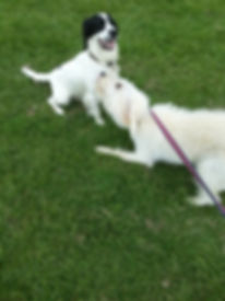 Dog Boarder Milton Keynes, Milton Keynes professional pet services, Pet business milton keynes, Pet companies Milton Keynes, milton keynes doggie walker, mk doggie walker, mk doggie walkers, mk doggie walking services