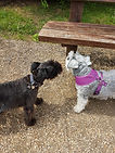 Dog Sitter Milton Keynes, Home Boarder, Home boarding dogs, home from home dog carers, Doggie home boarding, Doggie day care, pet boarding, pet services, professional dog sitter, professional dog walker, professional cat sitter, pet services business