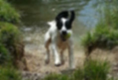 Dog Walker Milton Keynes, Dog Walkers Milton Keynes, Dog Walker MK, Dog Walker MK, Dog Walking Services Milton Keynes, Dog Walking Service MK, Professional Dog Walkers MK, Professional Dog Walkers Milton Keynes, Dog Walker Needed in Milton Keynes
