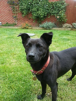 Milton Keynes Pet Sitting Services, Dog Sitter in Milton Keynes, Dog Sitter MK, Dog Walking Services Milton Keynes, Dog Walker Services Milton Keynes