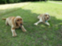 Dog Walking Services Milton Keynes, Pet Walking Services Milton Keynes, Doggie Day Care Milton Keynes, Dog day care Milton Keynes, Doggie Day Care mk, Doggie Day Care in MK