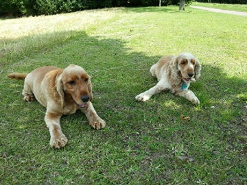 Dog Walking Services Milton Keynes, Pet Walking Services Milton Keynes, Doggie Day Care Milton Keynes, Dog day care Milton Keynes, Doggie Day Care mk, Doggie Day Care in MK